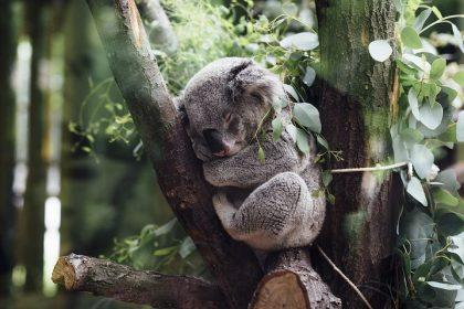 Mimic 5 Iconic Aussie Animals